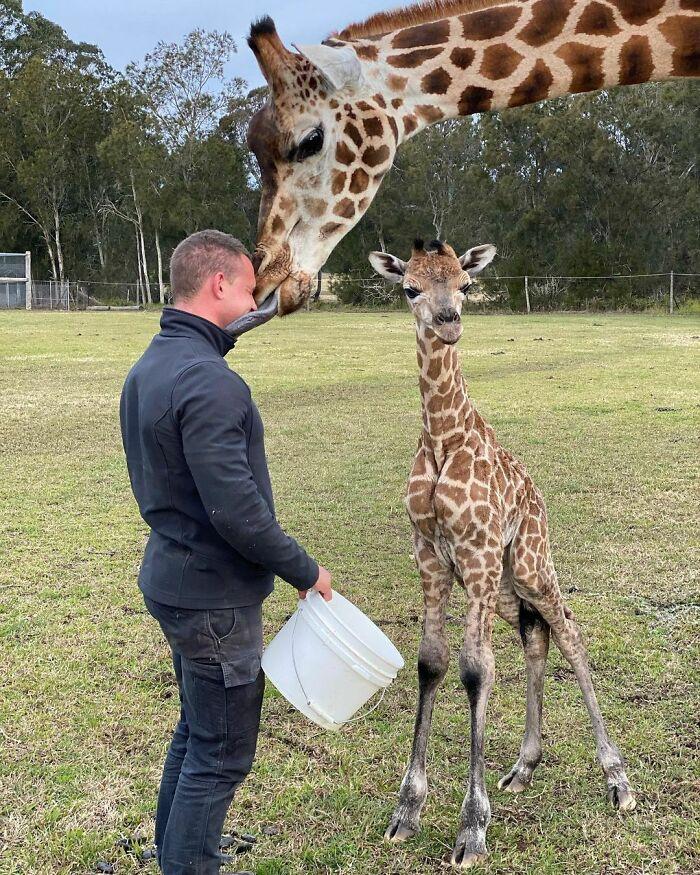 (Fonte: Instagram - Zookeeper Chad/Reprodução)