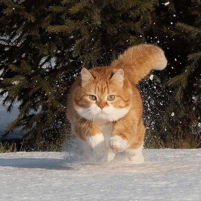 (Fonte: Instagram - Cute Snow Ginger Cat/Reprodução)
