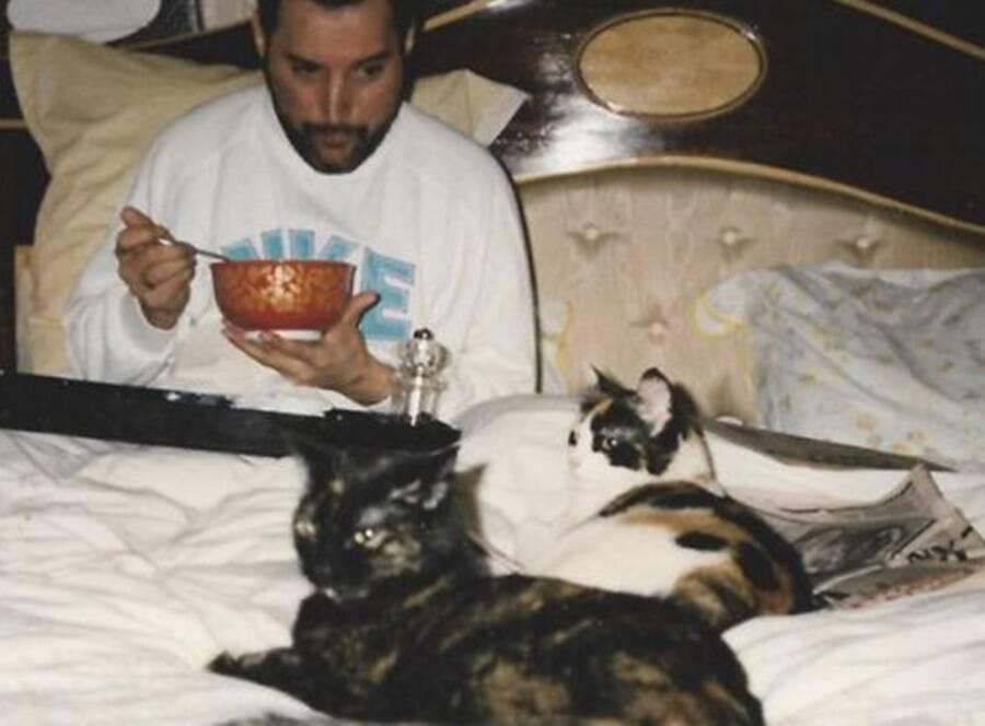 Goliath e Delilah estavam entre os felinos favoritos do cantor.