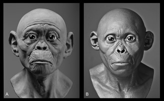 Different projections of the Taung child, one more simian (A) and the other more human (B)
