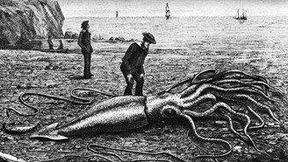 O lendário monstro marinho conhecido como Kraken (na verdade, uma lula gigante), encontrado na província canadense de Terra Nova e Labrador, em 1877.