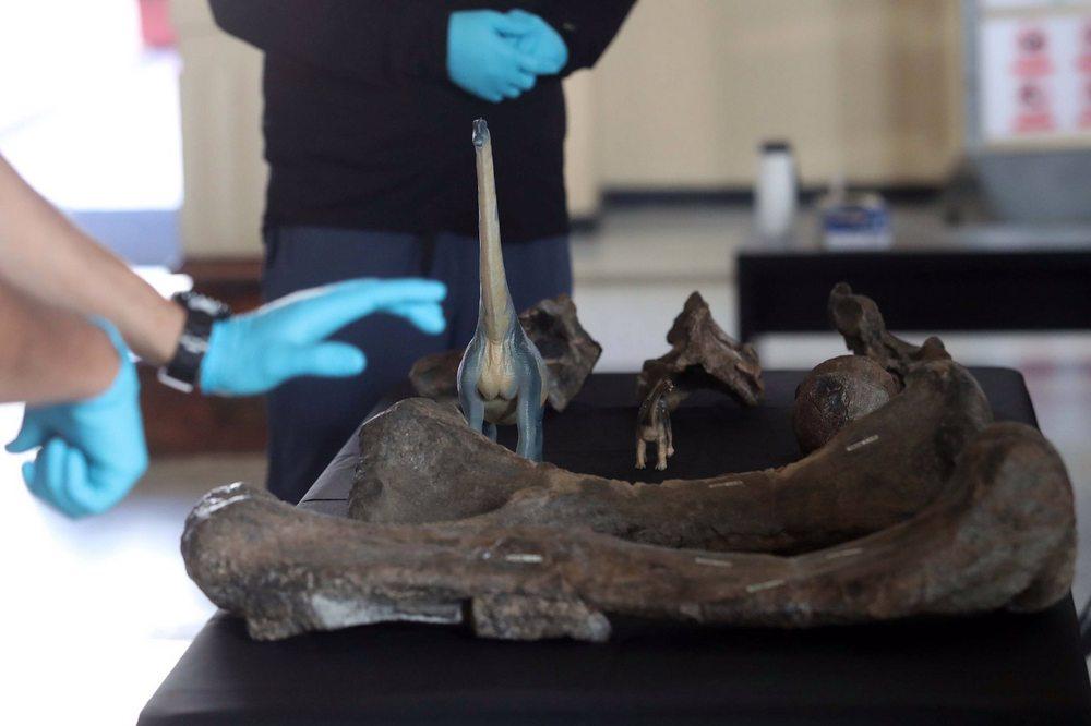 O ângulo entre o corpo e as patas do A. licanantay era reto, ao contrário de outros titanossauros.