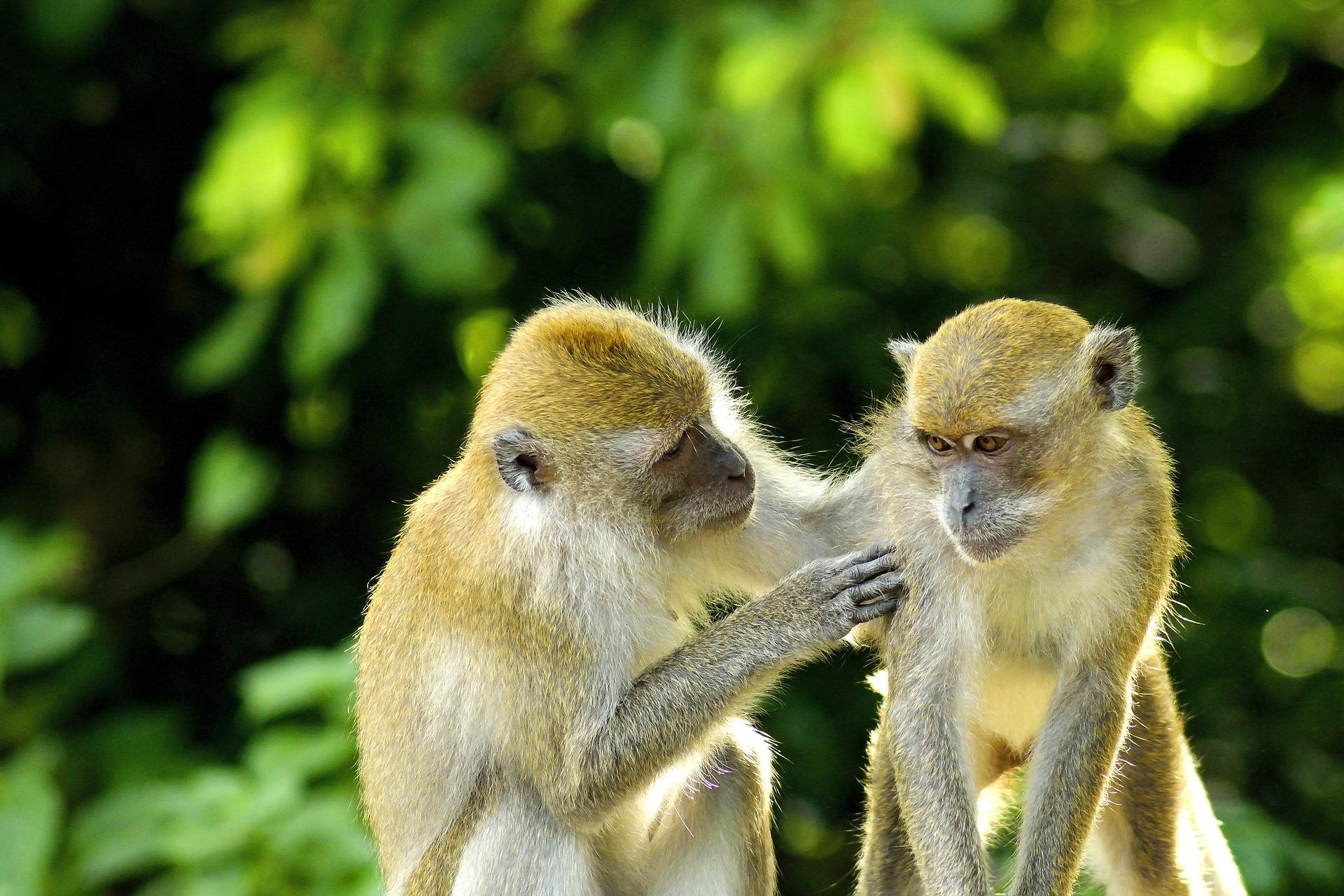 Dunbar chegou a seus números de interação social observando primatas.