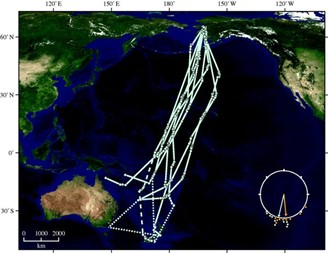 Flight track of nine birds equipped with satellite transmitters.