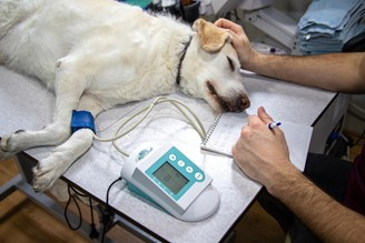 Creators of OncoK9 intend to revolutionize the diagnosis of cancer in dogs.