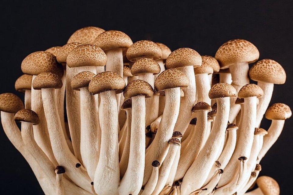 Comer dois cogumelos por dia pode diminuir risco de câncer em 45%