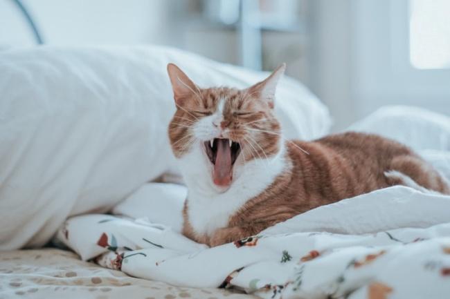 Aparentemente, os gatos são mais suscetíveis à doença.