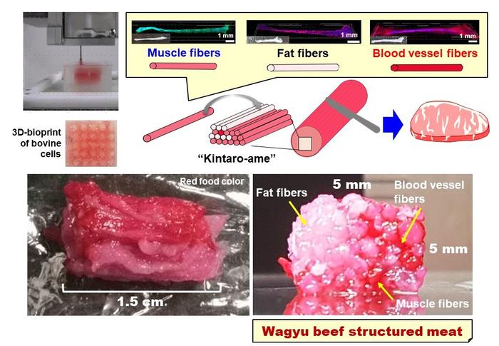 El gráfico de investigación muestra una imagen de una impresión de carne, seguida de tres tipos de células diploides.  El lienzo se ha cortado verticalmente y el resultado son las imágenes en la parte inferior del gráfico.