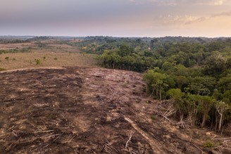 deforested area
