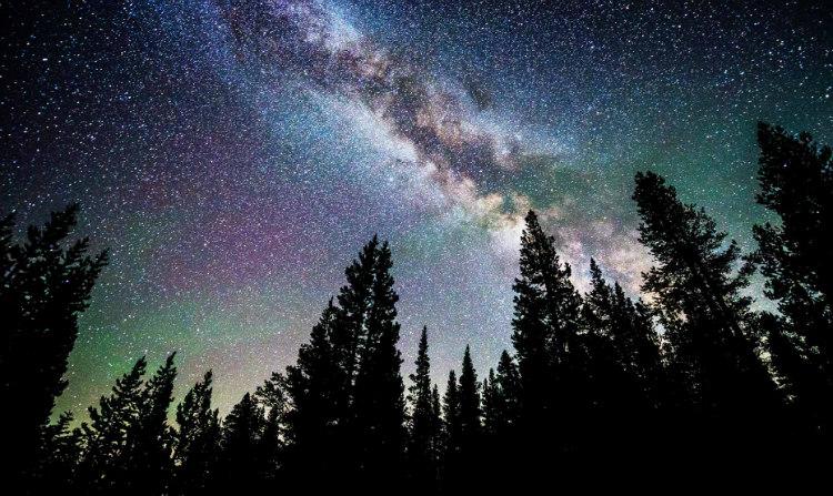 #AstroMiniBR: existem mais árvores do que estrelas na Via Láctea!