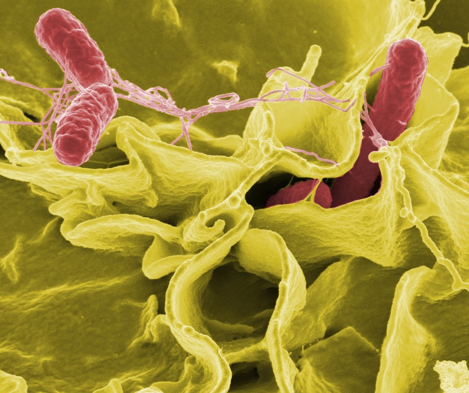 Uso de bactérias em tratamento de câncer tem bons resultados em novo estudo