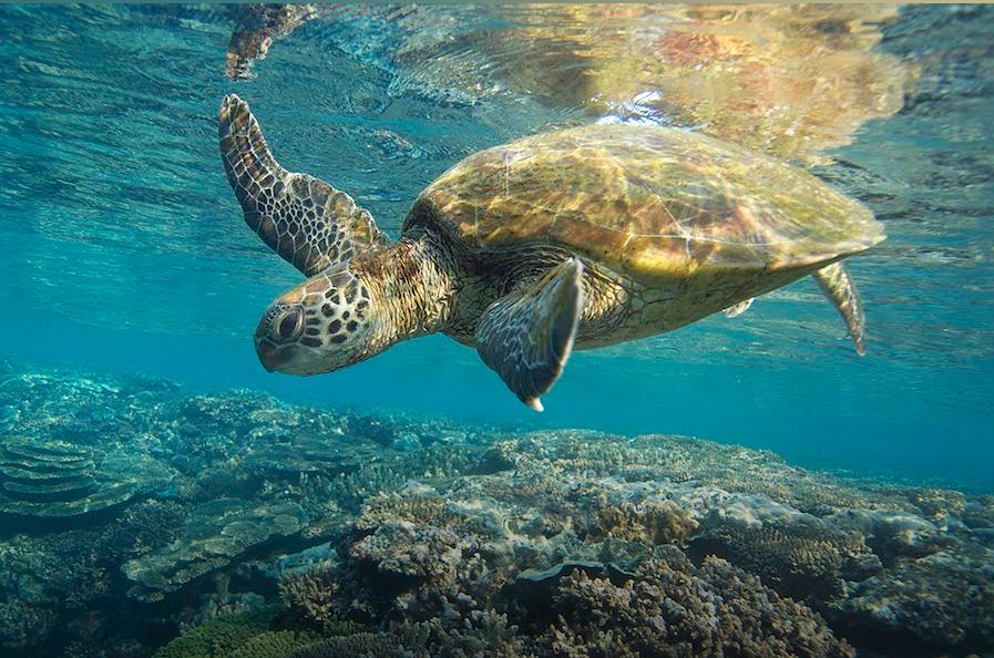 Exemplo de foto do passeio na Grande Barreira de Coral Australiana