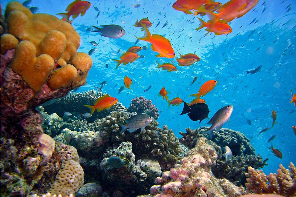 Planeta perdeu 14% de seus corais nos últimos 10 anos, diz relatório