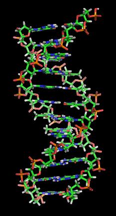 Pesquisas tenta utilizar a capacidade do DNA em processadores de computador.