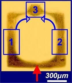 Uma porta lógica à base de neurônios é a primeira peça de um neurocomputador.