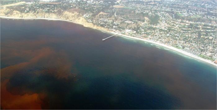 O fenômeno da Maré Vermelha na Califórnia