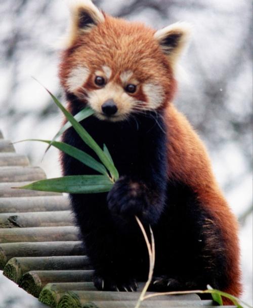 O verdadeiro Firefox