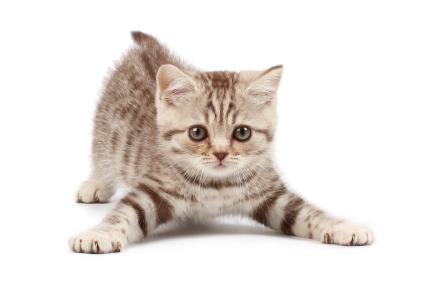 A equipe de Modha já é capaz de reproduzir o cérebro de um gato!