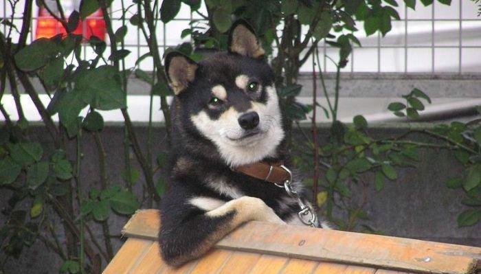O cachorro mais descolado!