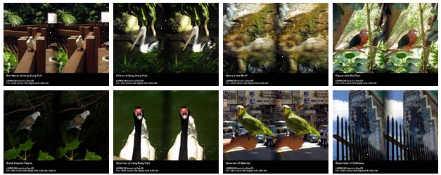 Imagens de amostra da captura com a Loreo 3D Lens in a Cap