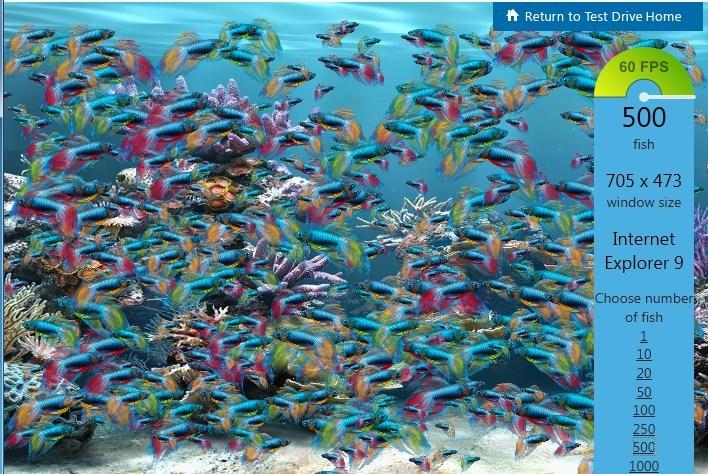 Peixes em 60 fps