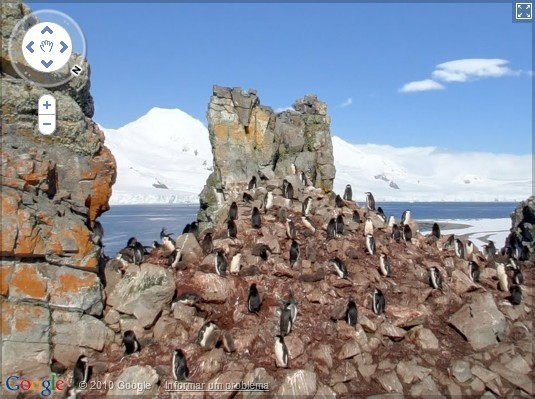 Pinguins da Antártica com o Street View