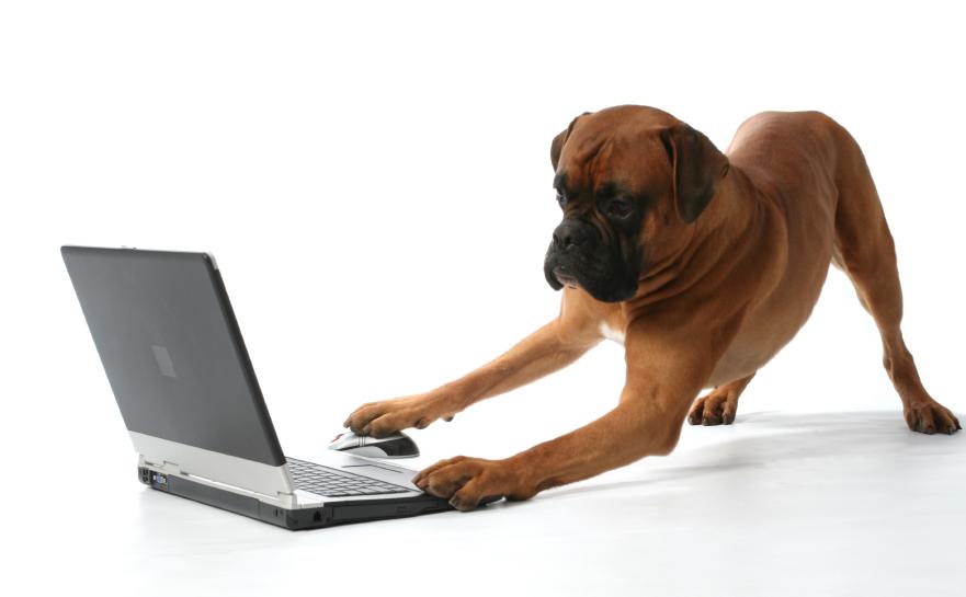 Cachorros twittando!