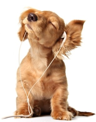 Adoro ouvir música ao contrário!