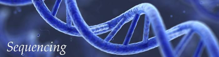 Informações digitais sobre o DNA em poucas horas