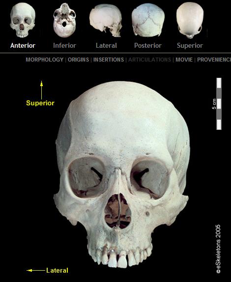 visualização do eSkeleton