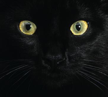 Já temos supercoputadores tão velozes quanto cérebros de gatos!